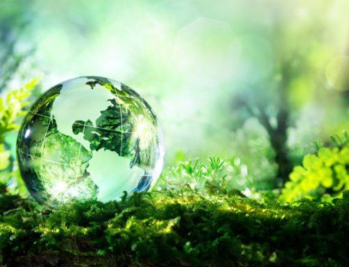Die digitale Umwelt gestalten – die Umwelt digital gestalten?